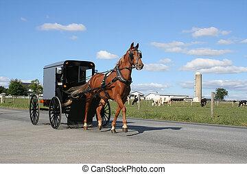 Amish, carruagem