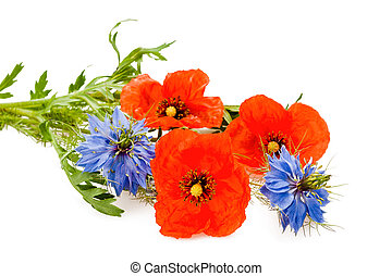 nigella and poppy flowers isolated on white
