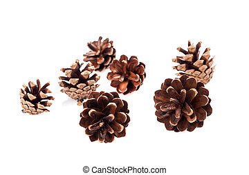 Pine cones group isolated on white