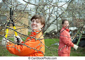 women pruning fruits tree - Two women pruning fruits tree in...
