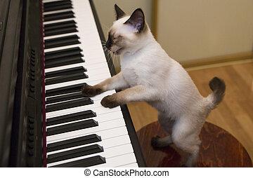 canta, canção, gatinho, enquanto, jogar piano