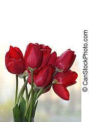cantero, con, rojo, tulipanes, (tulipa), con, lugar, para, texto