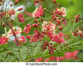 cantero, de, colorido, tulipanes, en, spring., rosa florece