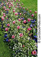 cantero, en, primavera, con, tulipanes