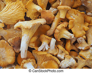 Cantharellus cibarius mushroom food