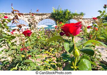 canto, de, jardim botanic, com, rosas vermelhas, e, mar