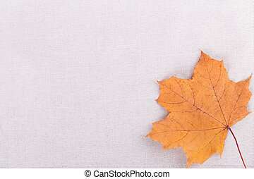 canvas background and yellow leaf