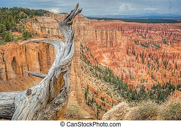 Canyon Bryce at rain