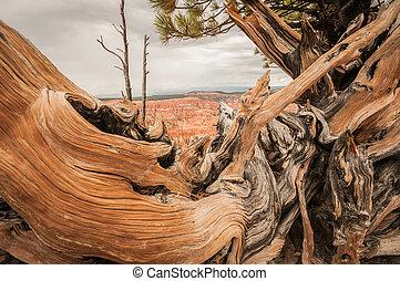 Canyon Bryce wood