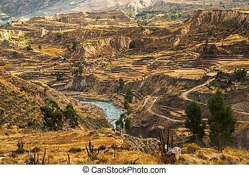 canyon, colca, vue
