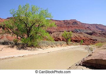 canyon paria, fiume, fluente, verso, solitario, valletta,...