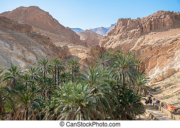 Canyon with palm trees in the mountain desert