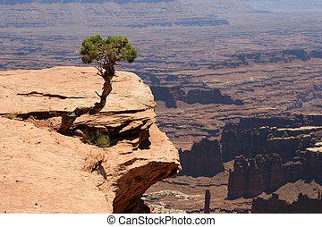 canyonlands の 国立公園