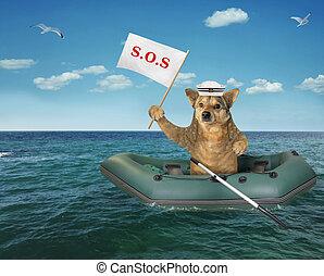 caoutchouc, bateau, chien, mer