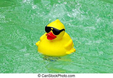 caoutchouc, piscine, canard