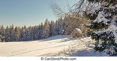 capanna, foresta