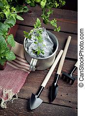 capannone, attrezzi, giardino, vaso, semenzali
