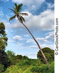 Cape Florida Palm