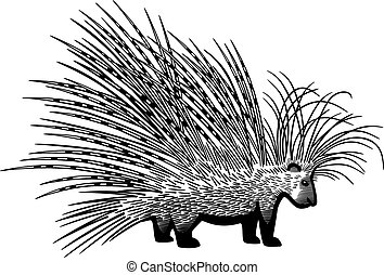 Cape Porcupine - vector drawing of the cape porcupine