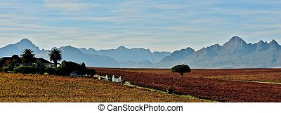 Cape Winelands - Landscape with mountains and vineyards on a...