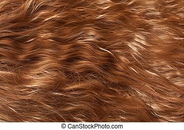 capelli, struttura