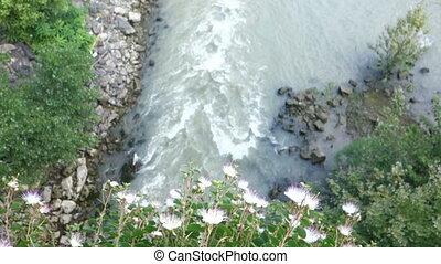 caper bush over a river - Capparis spinosa, the caper bush,...
