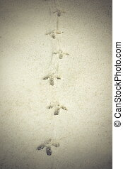 capercaillie tracks on snow