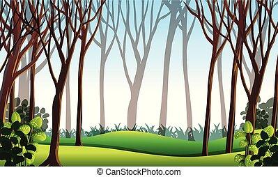 capim, floresta verde, cena