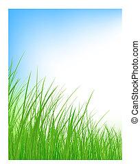 capim, prado verde