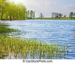 capim, verde, lago