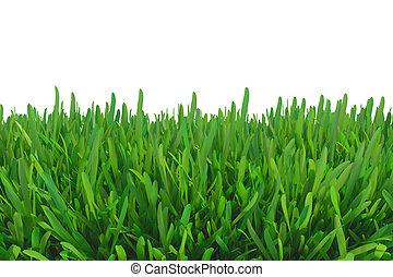 capim, verde, natureza