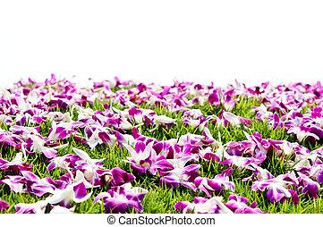 capim, verde, orquídea
