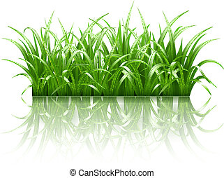 capim, vetorial, verde