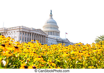 Capitol building Washington DC daisy flowers USA - Capitol...