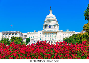 Capitol building Washington DC pink flowers USA - Capitol ...