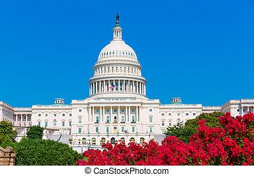 Capitol building Washington DC pink flowers USA