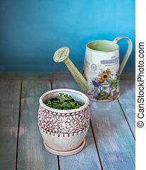 Capo with green greens of a spit in a deco pot and a watering can with a floral pattern on a wooden table
