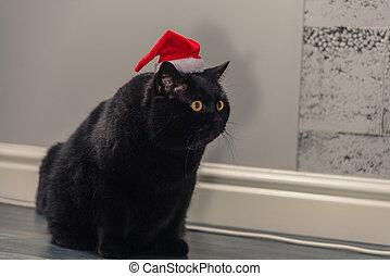 cappello, nero, natale, gatto