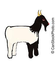 capra tibetana - capra di razza tibetane isolata su fondo...