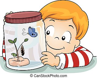 capretto, ragazzo, scienza, farfalla, ciclo vitale