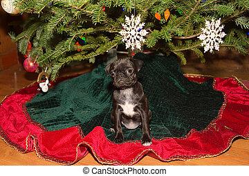 Capri Christmas Sitting Under Tree