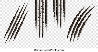 capriccio, artigli, rigature, -, vettore, isolated., talons, tagli, animale, gatto, cane, tiger, leone