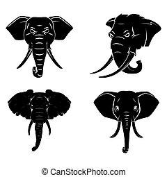 capstrzyk, głowa, słoń