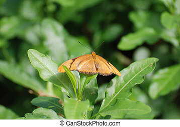 Captivating dark orange Julia Butterfly in the wild - Dark ...