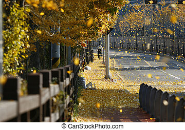 Capturing Falling Leaves