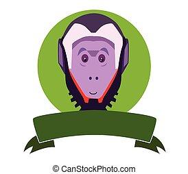 capuchin 猿