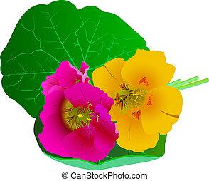Capucine Fleurs Feuilles Couleur Eau Hand Draw Image Fleurs