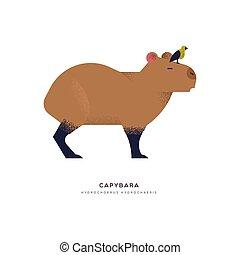 Capybara wild animal on isolated background