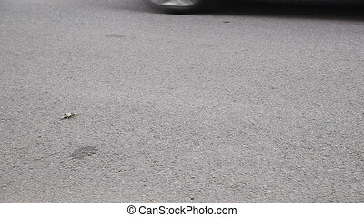 Car brakes the front wheel - Minibus brakes sharply on the...