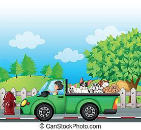 car, costas, rua, verde, ao longo, cachorros